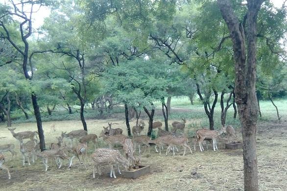 parks-in-andhra-pradesh-mahavir-harina-vanasthali-national-park