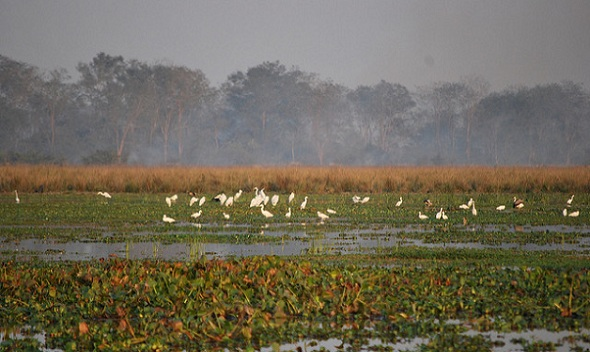 parks-in-assam-bordoibam-bilmukh-bird-sanctuary