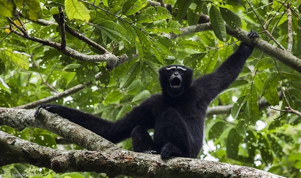 parks-in-assam-hoollongapar-gibbon-sanctuary