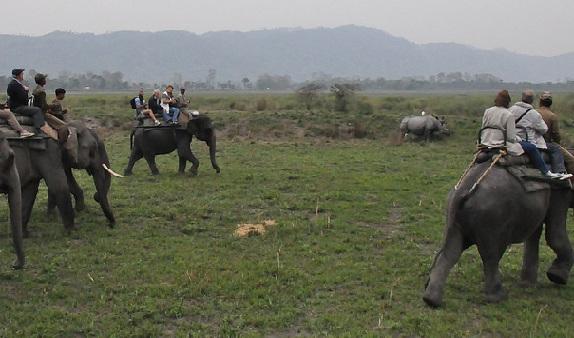 parks-in-assam-kaziranga-national-park