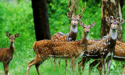 parks-in-chhattisgarh-barnawapara-sanctuary
