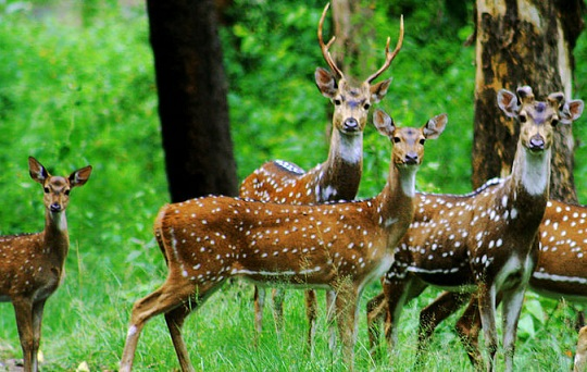 parks in chhattisgarh