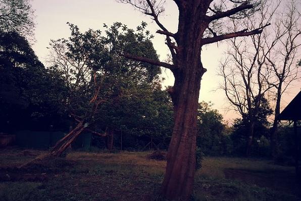 parks-in-maharashtra-dajipur-forest