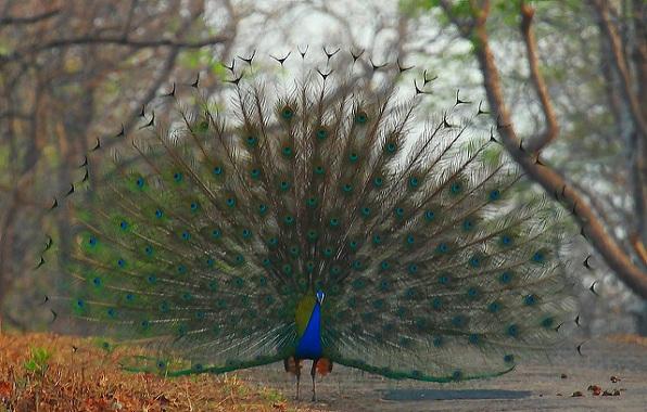 parks in maharashtra