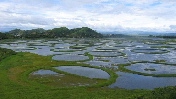 parks-in-manipur-keibal-lanjao-national-park
