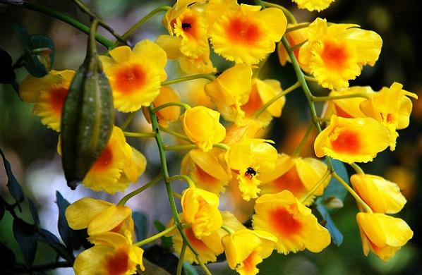 parks-in-manipur-khonghampat-orchidarium