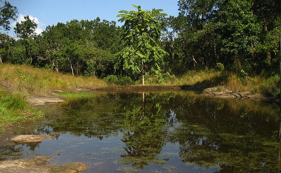 parks-in-meghalaya-siju-bird-sanctuary