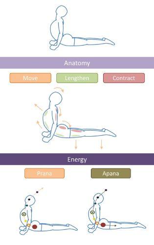 Bhujangasana Yoga Steps with Images