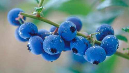 Blue Berry Face Packs