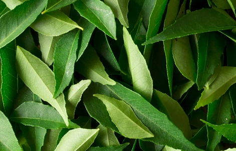 Curry leaves for hair