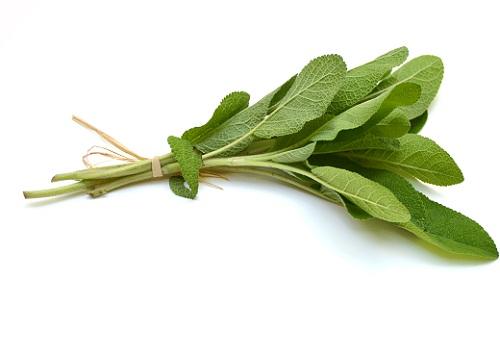 Have Sage Tea