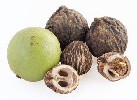 Home Remedies for Grey Hair - Black walnut