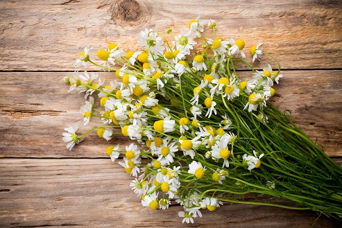 How to Reduce White Hair -Chamomile flowers