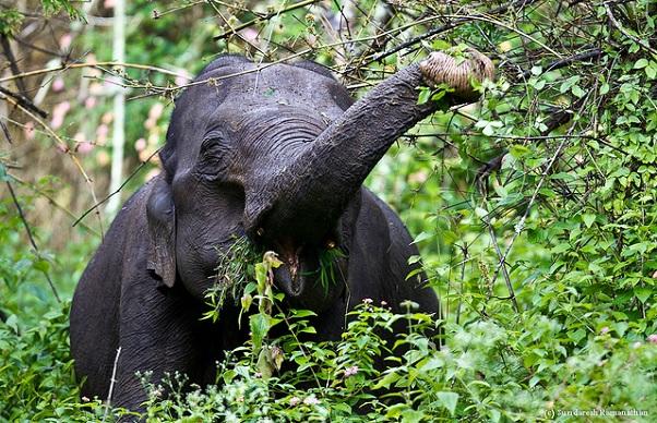 parks-in-karnataka_bandipur-national-park