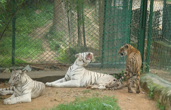 parks-in-karnataka_bannerghatta-national-park