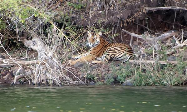 parks-in-karnataka_bhadra-wildlife-sanctuary