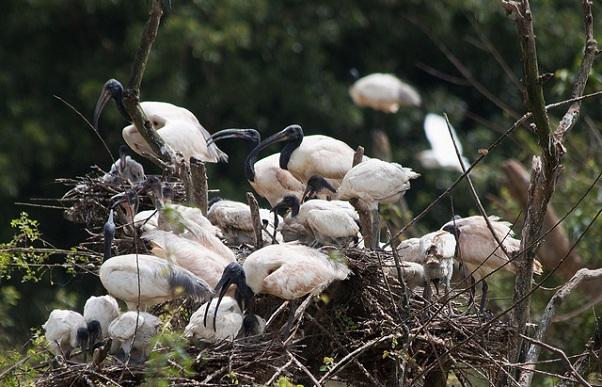 parks-in-karnataka_gudavi-bird-sanctuary