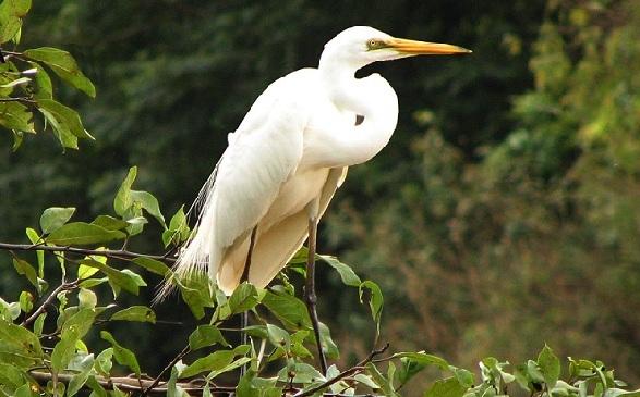parks-in-karnataka_mandagadde-bird-sanctuary