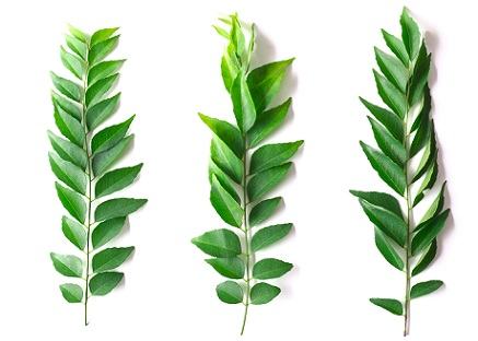 curry leaves-home remedy for dry hair