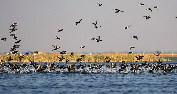 parks-in-gujarat-nalsarovar-bird-sanctuary