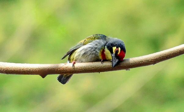 parks-in-haryana-saraswati-wild-life-sanctuary