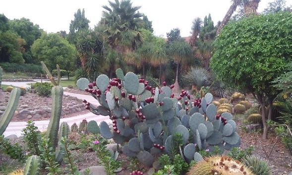 parks-in-haryana-cactus-garden
