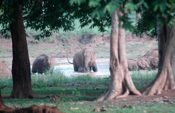 parks-in-jharkhand-betla-national-park
