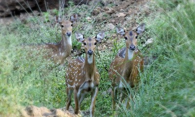 parks in jharkhand