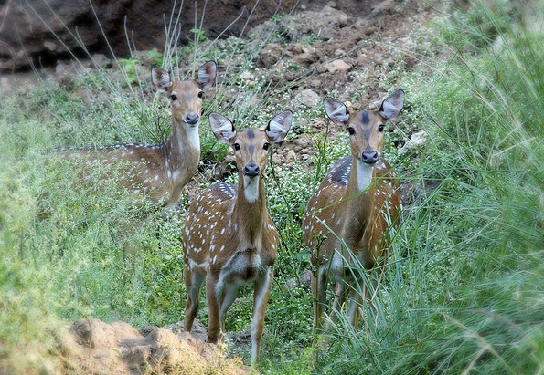 parks-in-jharkhand-hazaribagh-national-park