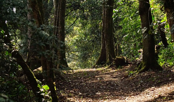 parks-in-kerala-mathikettan-shola-forest