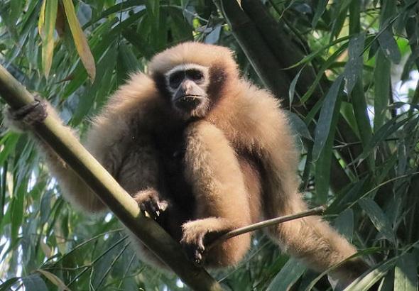 parks-in-mizoram-pualreng-wildlife-sanctuary