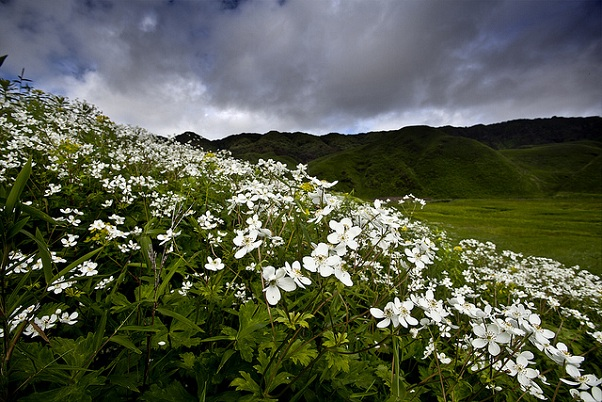 parks-in-nagaland-dzukou-flower-valley