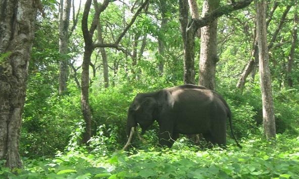 parks-in-nagaland-intanki-national-park-nagaland