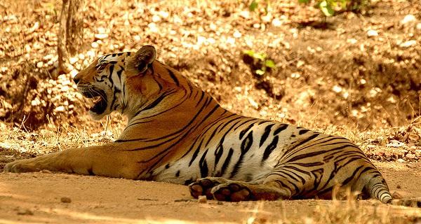 parks-in-odisha-simlipal-national-park