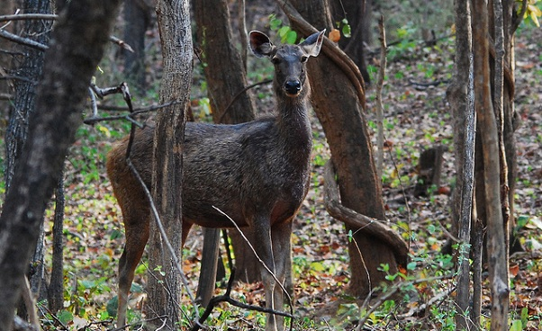 parks-in-odisha-ushakothi-wildlife-sanctuary
