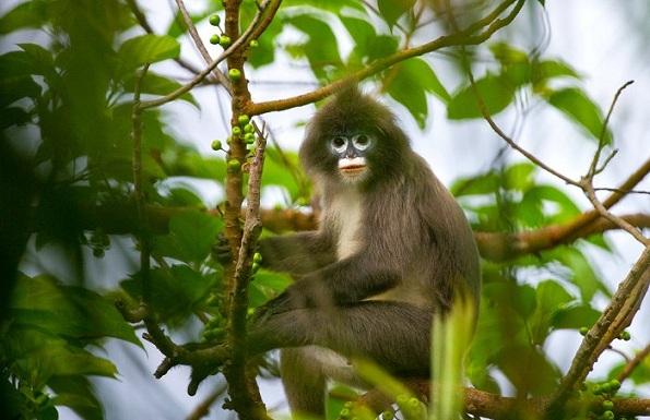 parks-in-tripura-rowa-wildlife-sanctuary