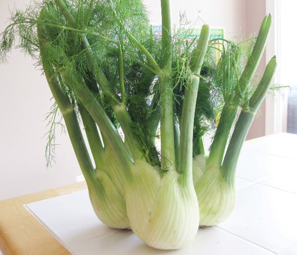 fennel benefits and uses