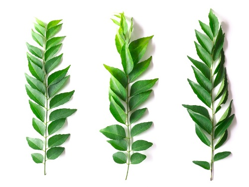 Home Remedies For Cholesterol-curry leaves