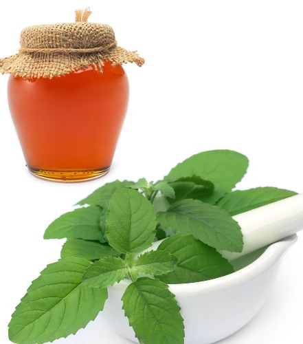 Home Remedies For Kidney Stones basil and Honey