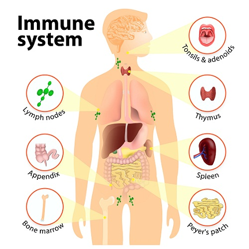 Ways To Grow Taller Naturally - Proper Immune System