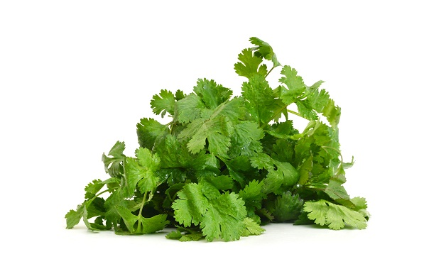 coriander leaves for haircare