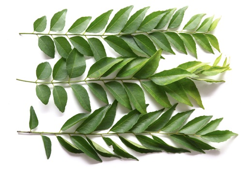 curry-leaves for obesity
