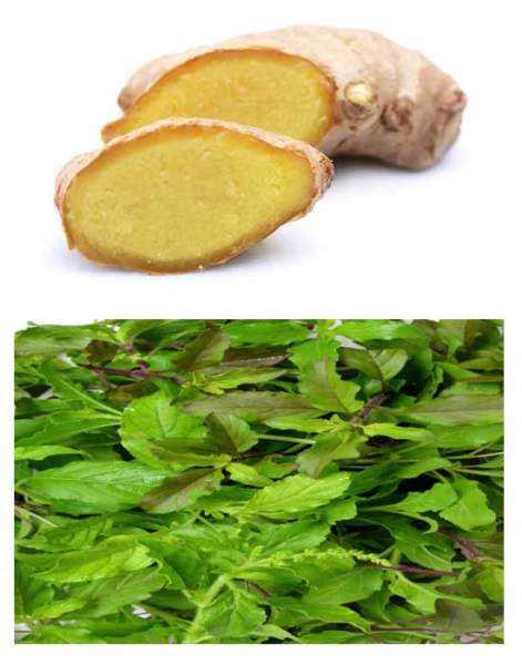 GInger and Tulasi home remedies for cough in kids