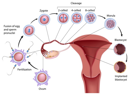 Ovulation Symptoms And Causes | Styles At Life