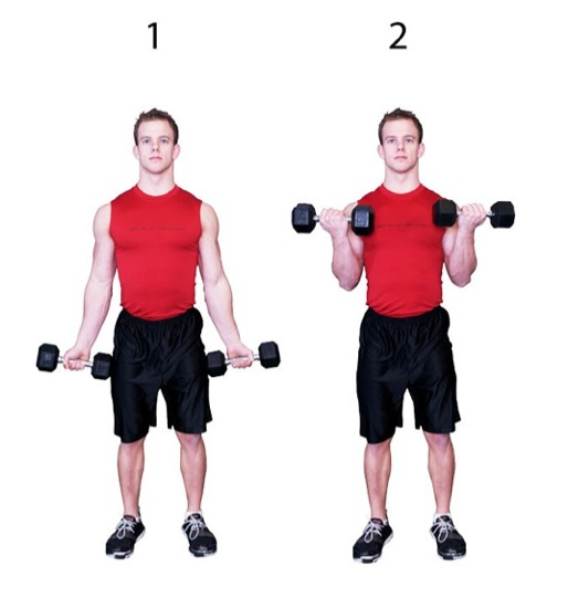 10 Best Exercises for Biceps | Styles At Life