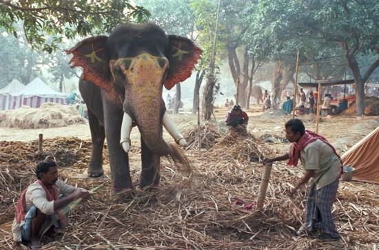 Sonepur Festival