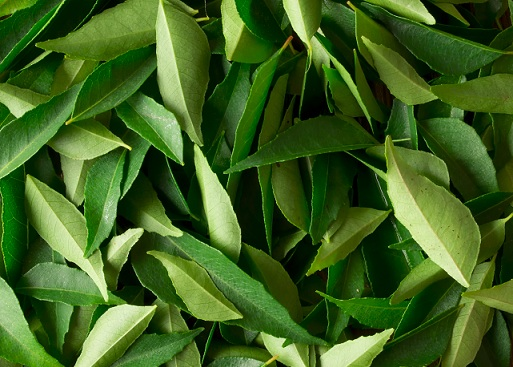 curry-leaves-hair