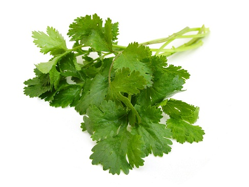 coriander leaves 45