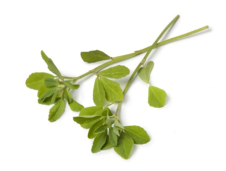 fenugreek leaves seeds