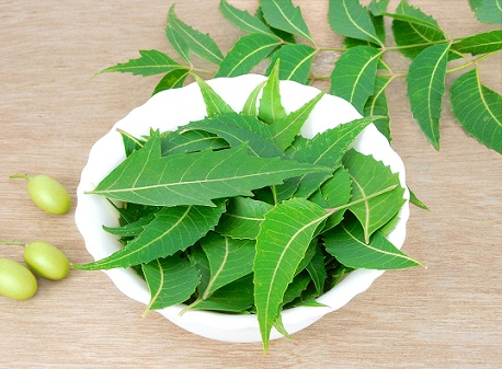 How to Remove Pimple in One Day-neem leaves